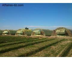 Algerie | Biskra | Sidi Okba | Ferme, grange | Vente terrain agricole | Annonce Algerie Le N°1 Annonces Affaires-dz.com
