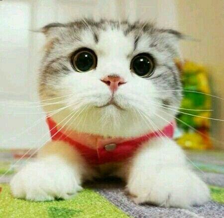 #animal #cute #kitten