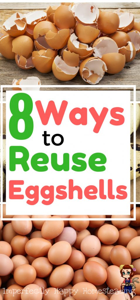 8 Fantastic Ways to Reuse Eggshells in the Garden, House and on the Homestead: