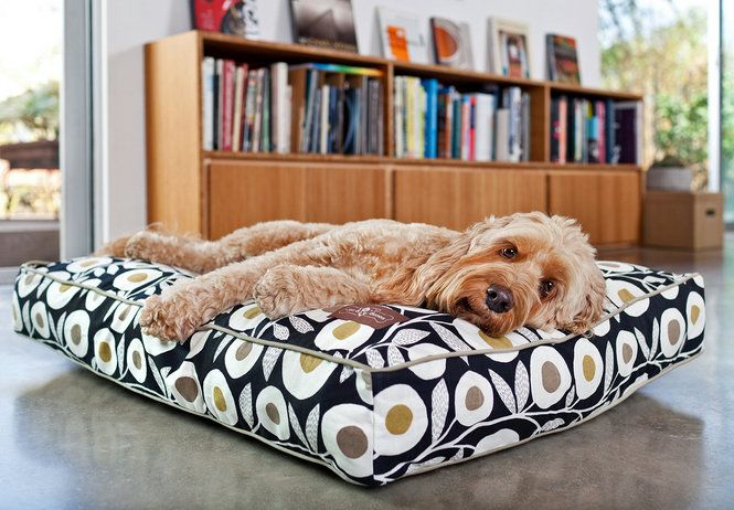 Marni Jameson: Contemporary dog beds offer comfort and style.