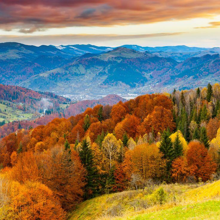fall-mountain-fun-red-orange-tree-nature-9-wallpaper.jpg 2524×2524 пикс