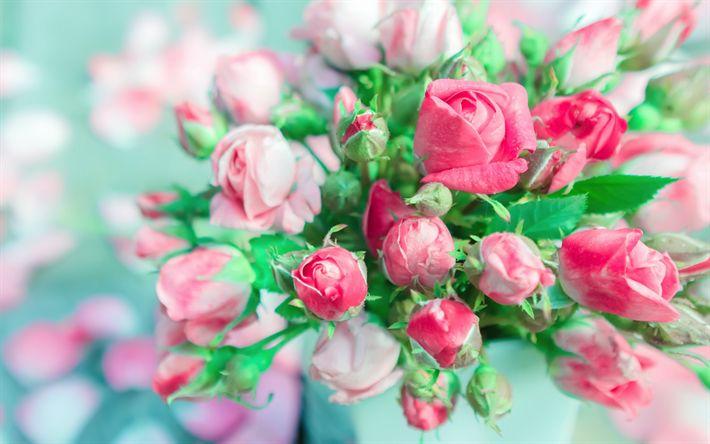 Lataa kuva kimppu ruusuja, lähikuva, vaaleanpunaisia ruusuja, kauniita kukkia, silmut, ruusut