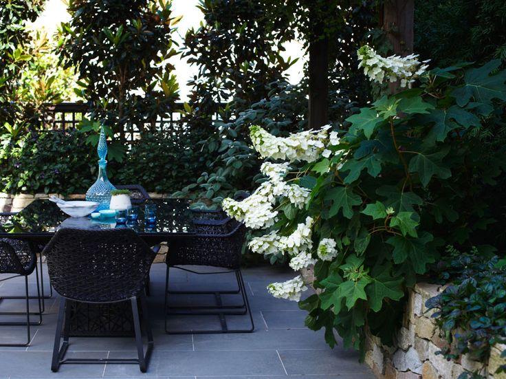 Inner City Rooftop Garden