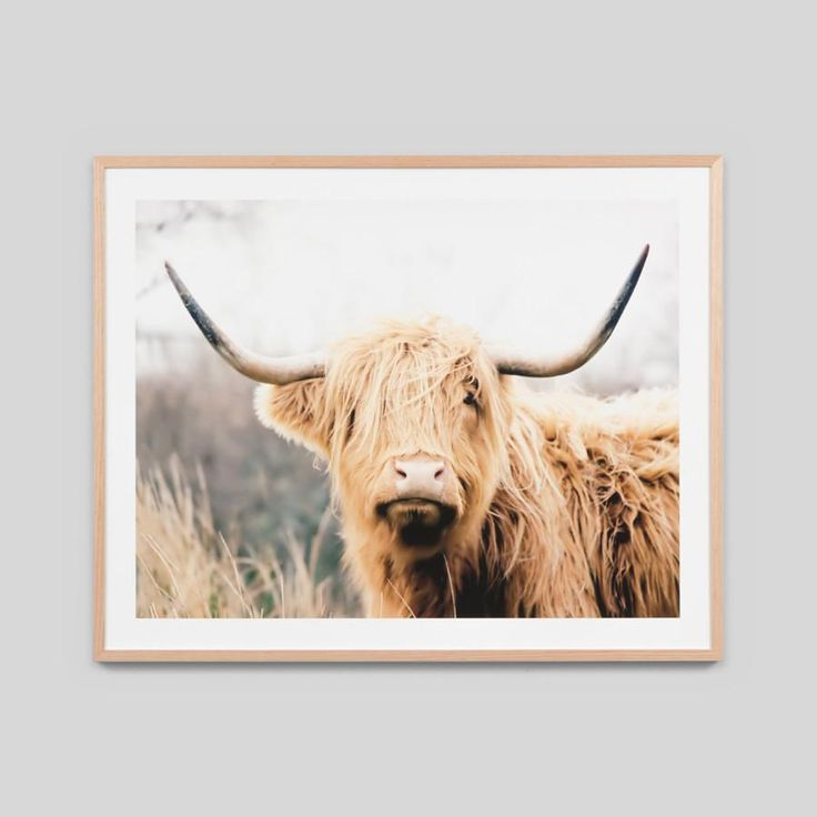 HIghland Bovine 101cm x 81cm from The Shelley Panton Store