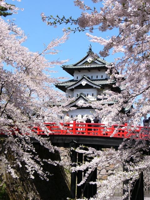 Hirosaki...best time to visit for sakura is late April to early May- about the time of Golden Week.