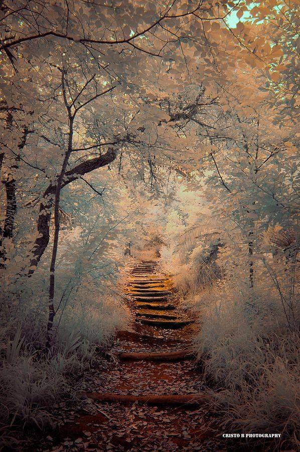 Magic Path - Cristo Bolanos http://fineartamerica.com/featured/magic-path-cristo-bolanos.html