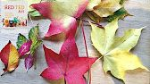 Weekend Design: Preserving Leaves with Wax - YouTube