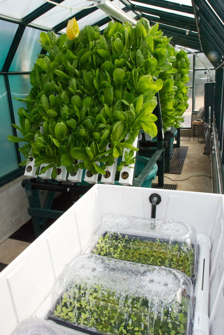 129 best images about aquaponics usa and food forever for Hydroponic grow bed