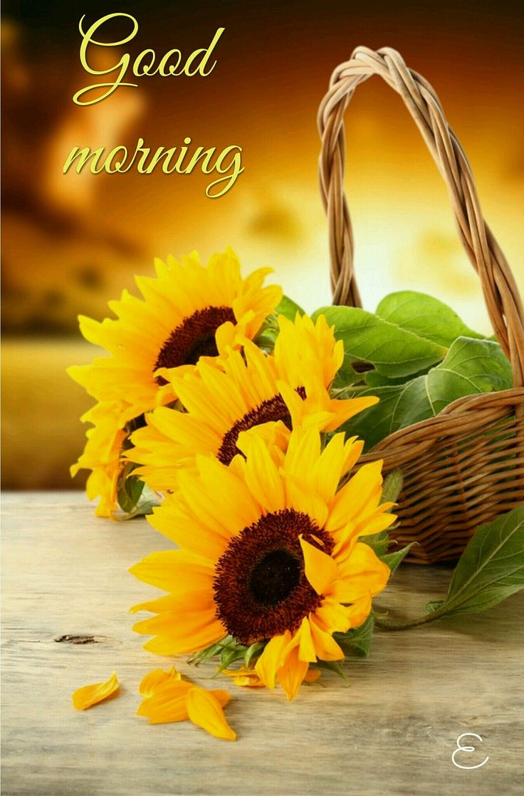 Good Quotes In The Story The Yellow Wallpaper 93 Nice Flowers Images With Good Morning Nature Good