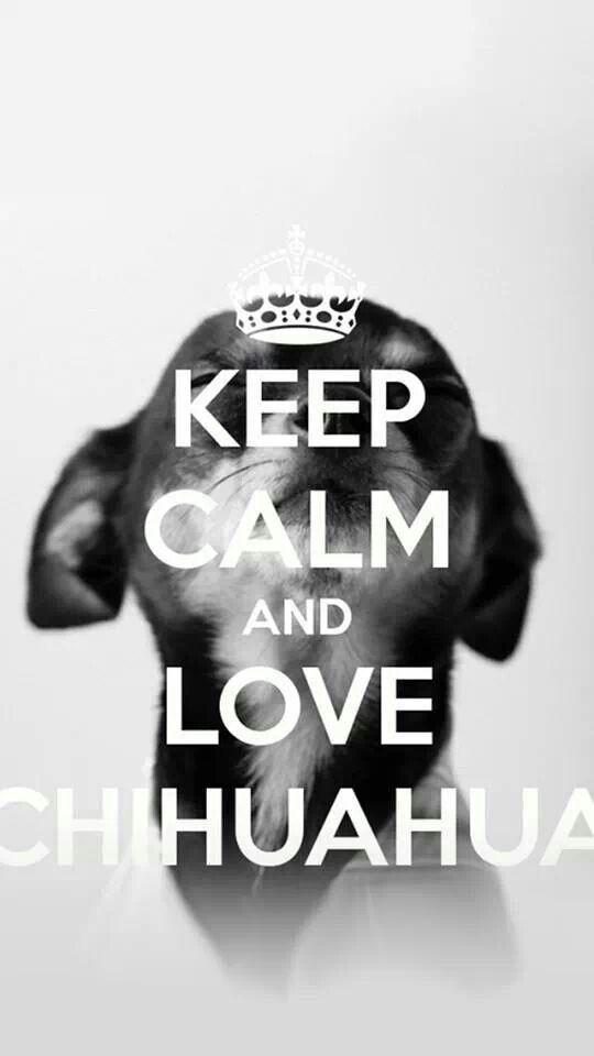 I love Chihuahuas!!!!!!