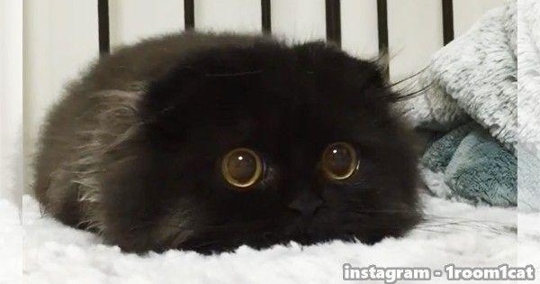 黒猫さん02