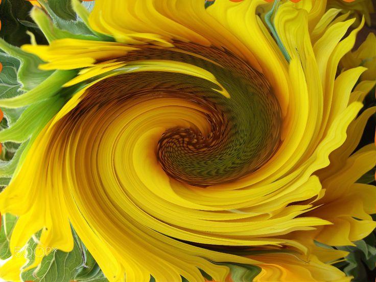 Sunflower - null