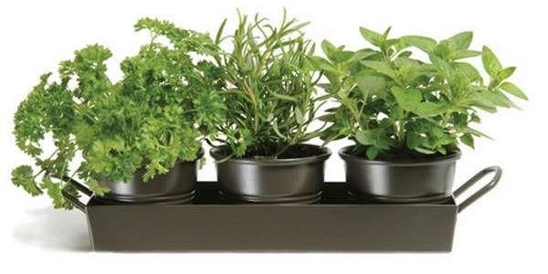 Quali erbe medicinali e aromatiche possiamo coltivare in inverno? #winter #recipe #food #laroscia