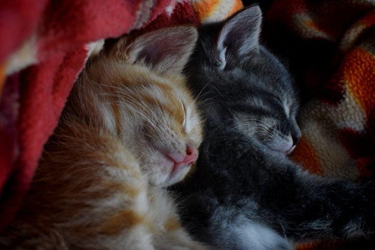 Beautiful cat#cute animals#pandy&sandy