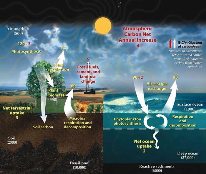 ciclo del carbono en la tierra y en el océano