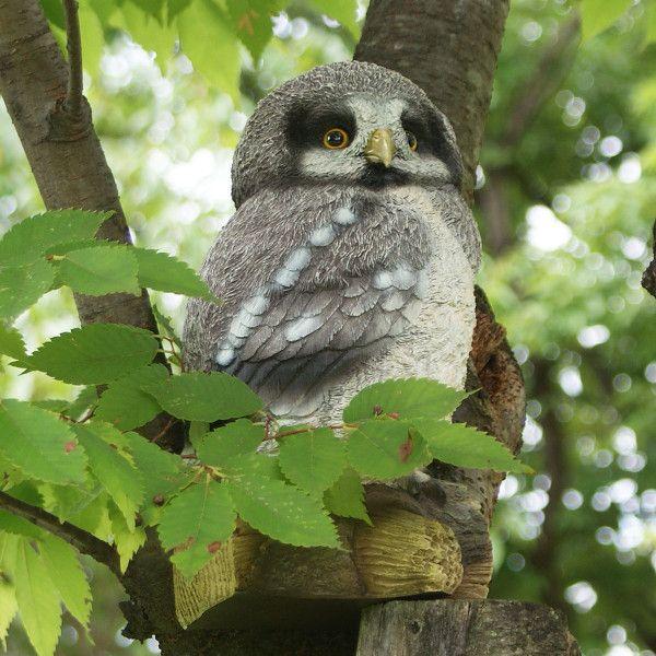 灰色ふくろうのガーデンオーナメント (ふくろうのアーロン) (置物 オーナメント 庭 かわいい 動物 オブジェ)|niwazakka