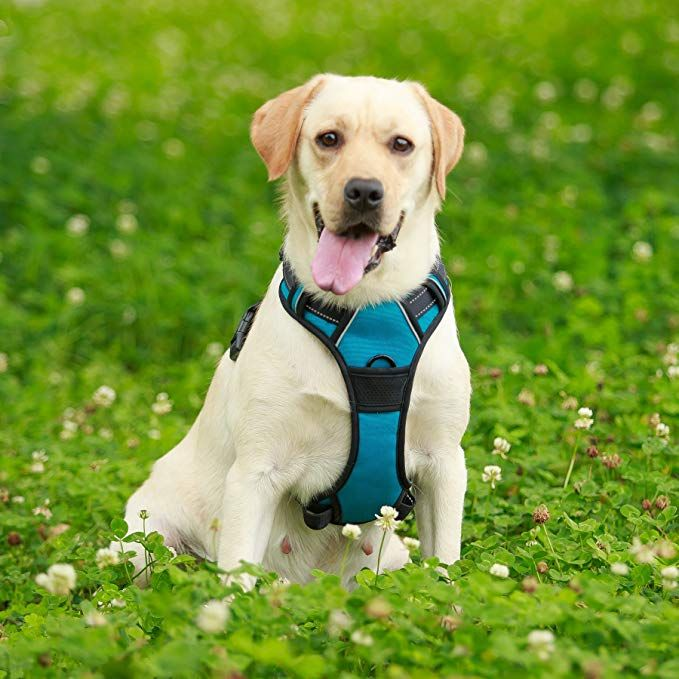 Amazon Com Barkbay No Pull Dog Harness Large Step In Reflective