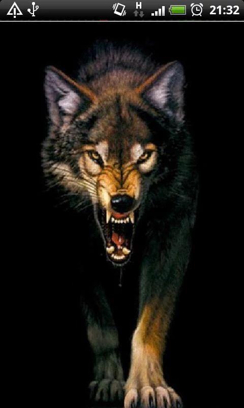 Angry Wolf Live Wallpaper– скриншот