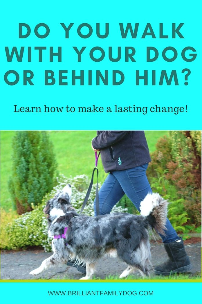 Dog Training Ideas You Need To Understand How To Talk With Your