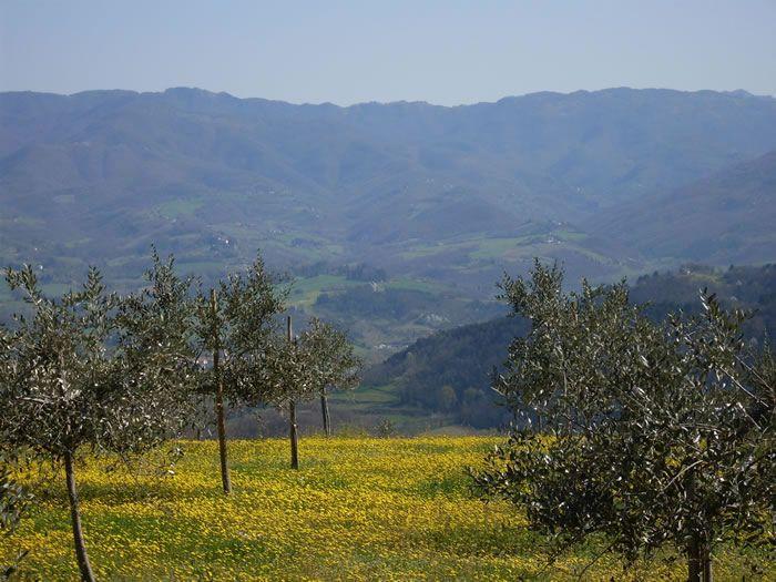 AmorOlio | Villa Campestri | Vicchio #Tuscany