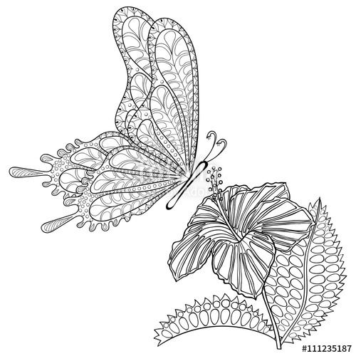 Vector: Hand drawn zentangle tribal flying Butterfly and Hibiskus flower