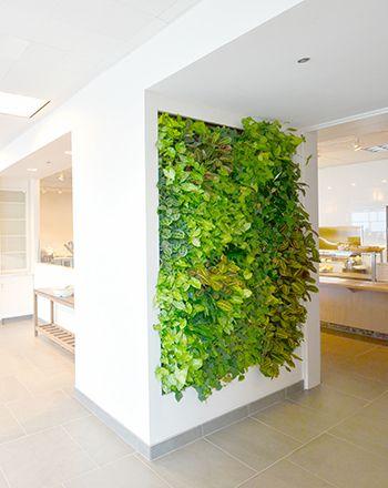 William sanoma plants