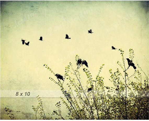 Summer Bird Photography Download, Spring Birds Flying, Family of Crows, Spring Photo, Nature, 8x10, Flock of Birds, Blackbirds, Raven