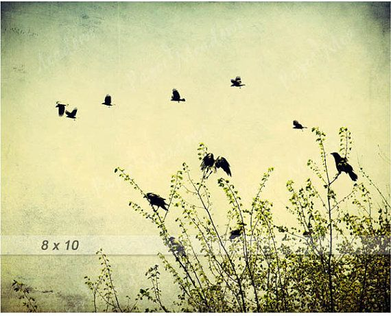Summer Bird Photography Download, Spring Birds Flying, Family of Crows, Spring Photo, Nature, 8x10, Flock of Birds, Blackbirds, Raven