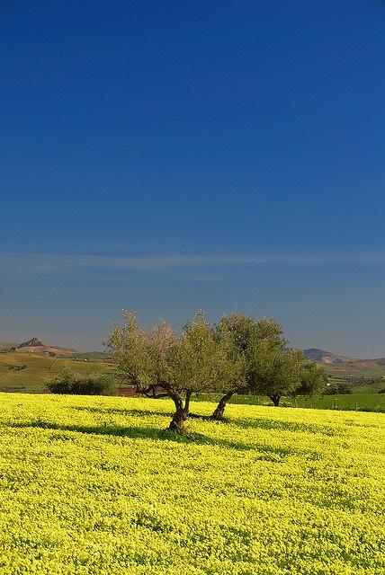 Still winter in Sicily