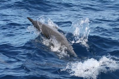 Facts About Dolphins - WDC Kidzone