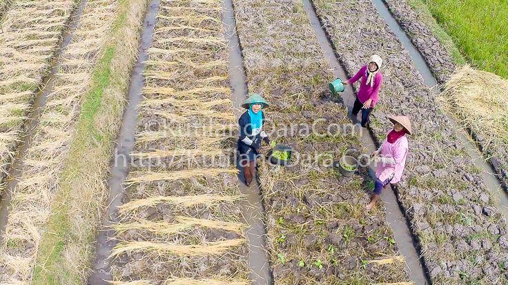 Traditional Farmers