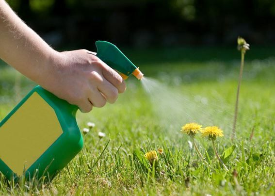 Come fare un diserbante naturale: ecco 5 diverse tecniche di provata efficacia per realizzare in casa un diserbante ecologico e a costi contenuti.