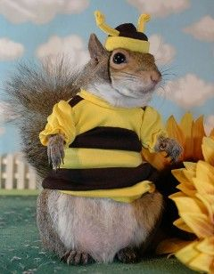 218 best images about squirrel love stuff on pinterest