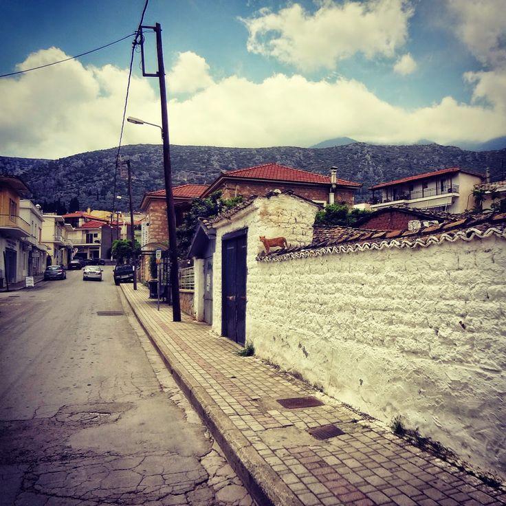 Πιγκουίνος: Το Στοιχειό της Χάρμαινας #greece #hellas #amfisa #salona