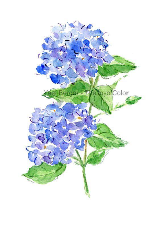 Impression Daquarelle Hydrangea Hortensia Bleu Impression Art