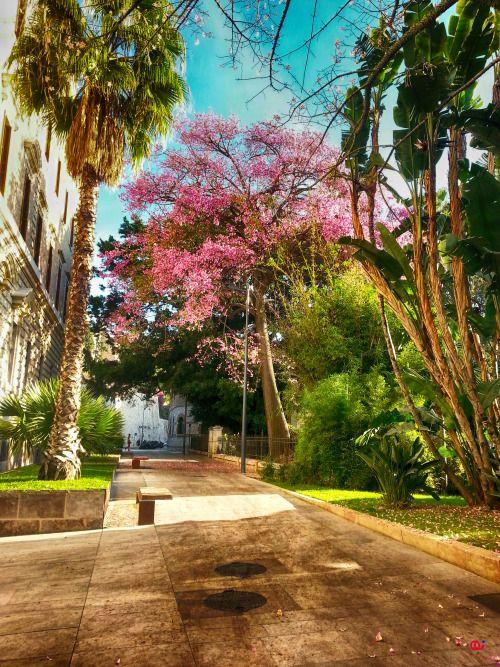 La naturaleza convive con el urbanismo de la ciudad bajo los efluvios del Museo de Málaga