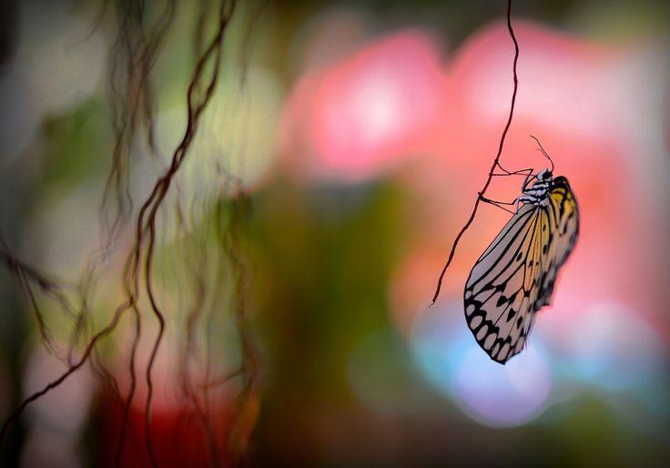 Best of the day  Photo: טרזן ביערות הגשם.... Photographer: דורית חיימובסקי http://photoliga.com/photos/2810989  More best photos here:  http://photoliga.com/photos  #bestfoto #bestofthebest #photographer #topphoto #photography #photoligacom #bestfotooftheday