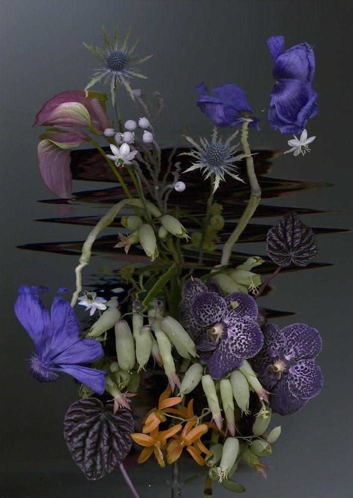 Sandra Kantanen, Distortion 6, 2017, Purdy Hicks Gallery