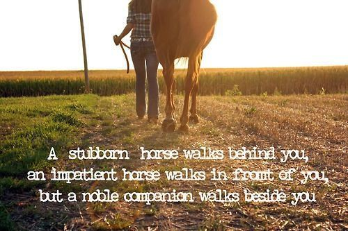 horse and rider relationship quotes