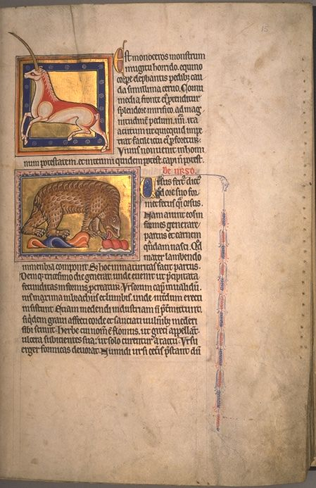 The Aberdeen Bestiary (Aberdeen University Library, Univ Lib. MS 24) is a 12th-century English illuminated manuscript. f15r Text: The monoceros. The bear.