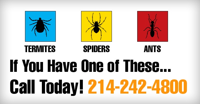 Dallas Pest Control | Pest Control Dallas