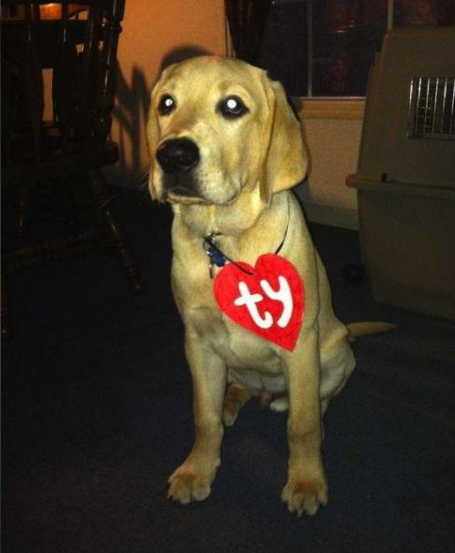 easy halloween dog costumes