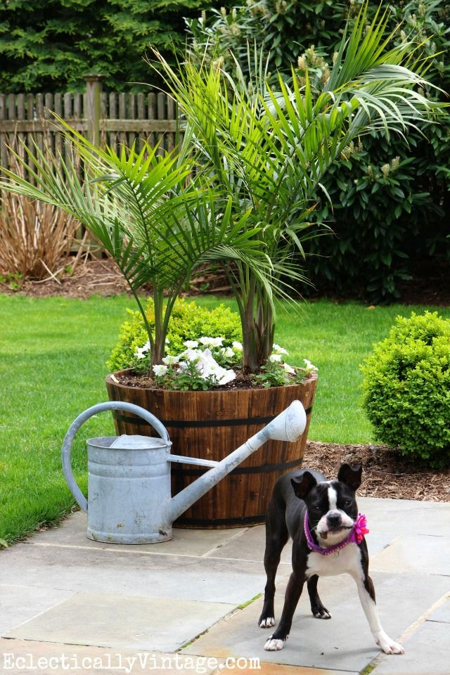 Backyard Planters Ideas 17 asian backyard designs that you need to see top dreamer Create An Outdoor Tropical Oasis In Your Backyard With Palm Trees In Giant Whiskey Barrel Planters