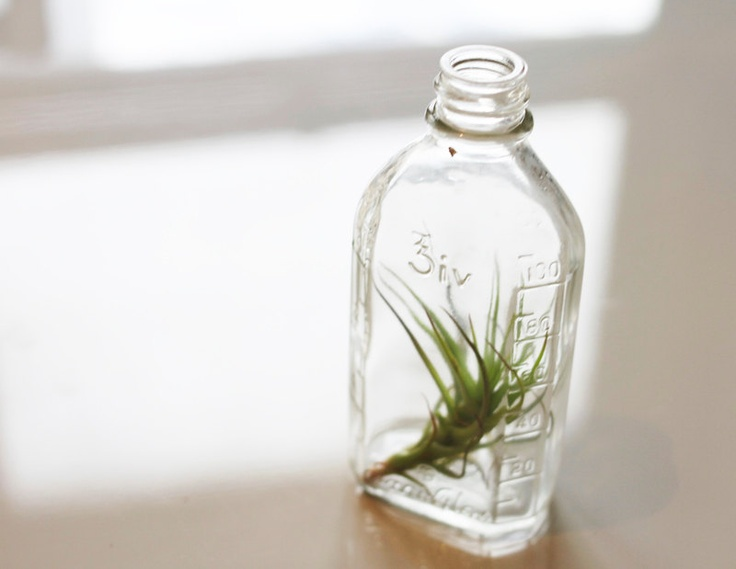 Apothecary Lab Bottle with Air Plant // Small Airplant Terrarium.  Etsy.