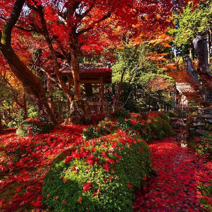 ' ' 【京都の紅葉】寂光院の紅葉🍁 ' 2016.11.18撮影 ' #kyoto #京都 #大原 #寂光院 #紅葉 #秋 #autumn #fall #team_jp_ #gf_japan #igersjp #ig_japan #ig_nippon #wu_japan #loves_nippon #lovers_nippon #japanfocus #icu_japan #wonderful_places #ptk_japan #japan_daytime_view ' #team京都 #team_jp_西 京都 #team_jp_秋色2016 #はなまっぷ紅葉2016 #lovers_nippon_2016秋 #ぶらり京都撮影部 ' #k_紅葉2016