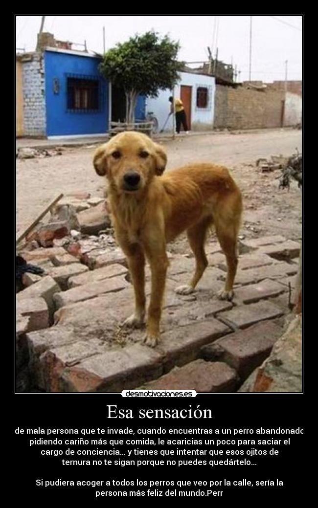 Carteles Perros Abandonados Desmotivaciones Perros Abandonados Gorras Para Perros Perros