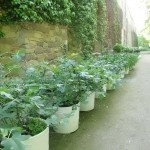 Planting Roses: How To Plant Roses For The Beginning Gardener
