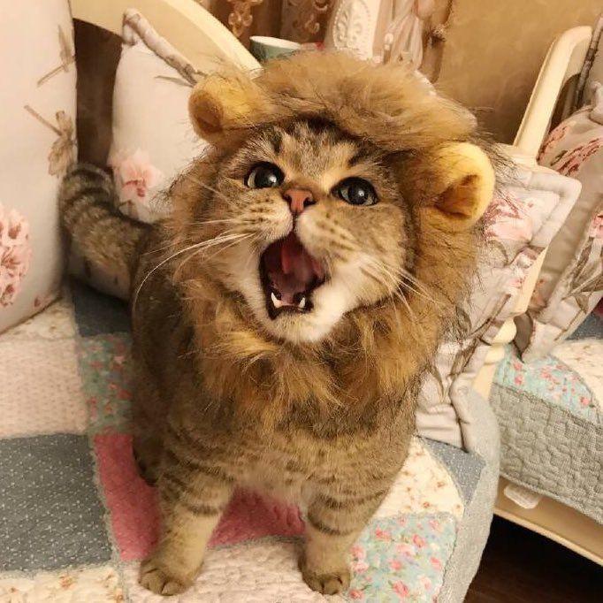 Cansei de ser gato, agora sou um leãozinho