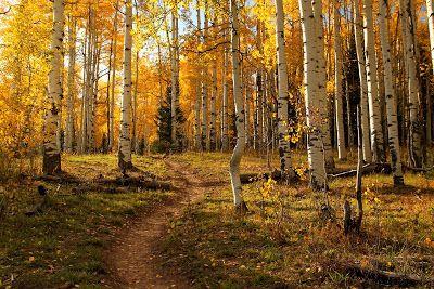 BANCO DE IMAGENES GRATIS: Paisajes naturales, montañas, ríos, lagos, imágenes de otoño, bosques, desiertos y flores.