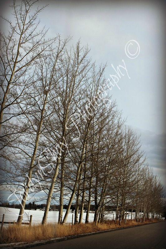 Blackwater Road, Vanderhoof, BC, Canada by JordynShay Photography